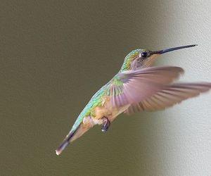 bird, colibri, and colors image