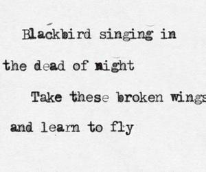 blackbird, quote, and text image