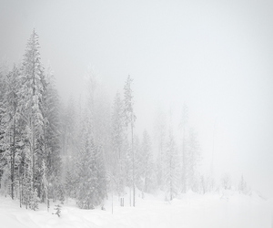 tree, winter, and landscape image