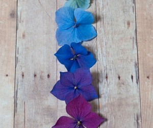 flowers, blue, and colors image