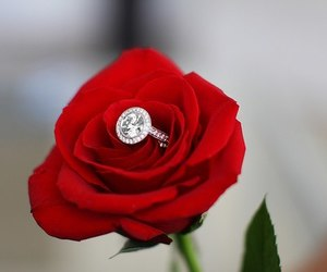 ring, rose, and flowers image