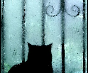 cat and rain image