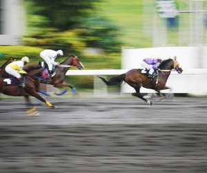 horse, ranch, and race image