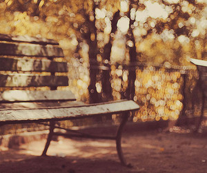autumn and bench image