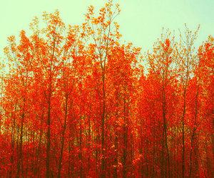 tree, autumn, and orange image