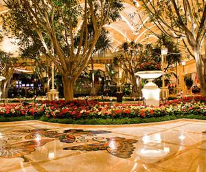 flowers, amazing, and luxury image