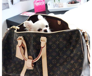 bag, Louis Vuitton, and pet image