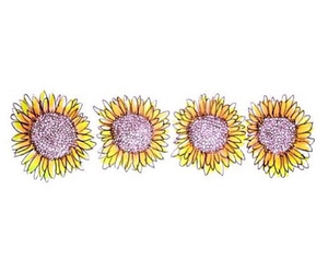 flowers, transparent, and sunflower image