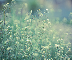 flowers, green, and meadow image
