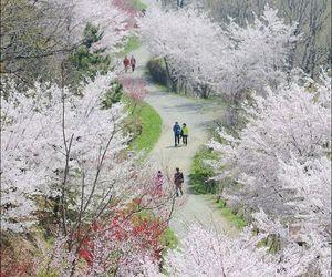 blossoms, seoul korea, and garden image