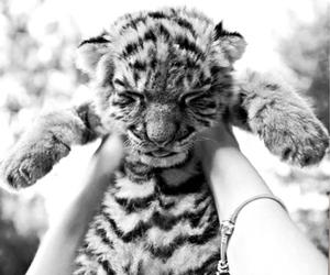 black&white, cuddle, and hug image