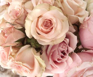 rose, flowers, and beautiful image