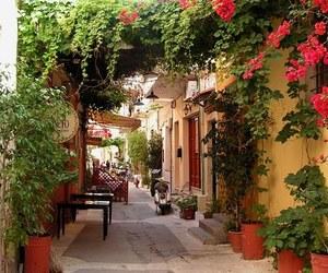 flowers, street, and crete image