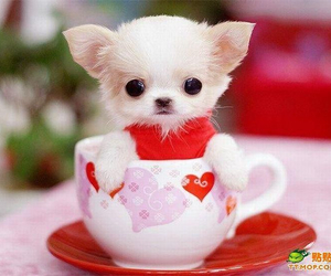 cutepuppy image