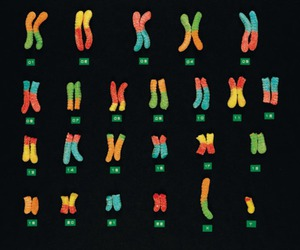 biology, genetics, and chromosomes image