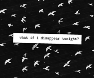 disappear, bird, and quotes image