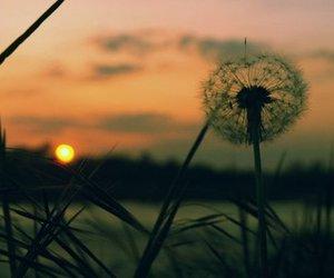 landscape, dandelion, and sunset image