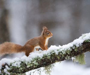 snow, squirrel, and cute image