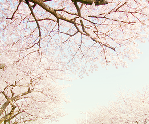 asia, japanese, and cherry blossom image