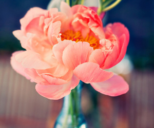 flower and flowers in your day image