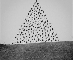 bird, triangle, and black and white image