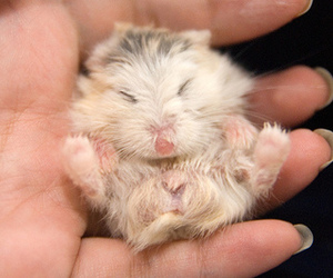 adorable, fuzzy, and hand image