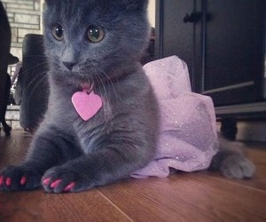 beautiful, cat, and pretty image
