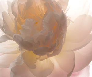 flower and theme image
