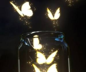 butterfly, light, and night image