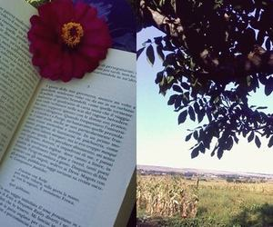 book, love, and flower image