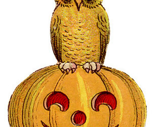 Halloween, vintage, and owl image
