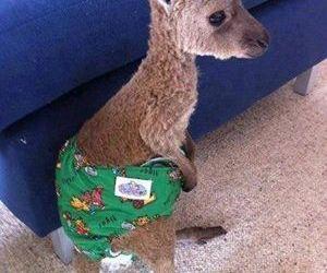 kangaroo, cute, and baby image