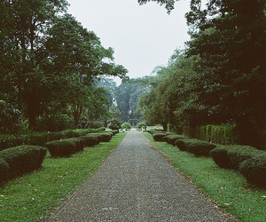 nature, park, and vintage image