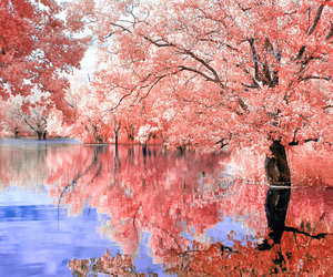 pink, nature, and photography image