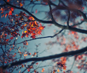 tree, leaves, and nature image
