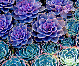 blue, cactus, and colors image