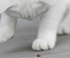 cat, ladybird, and red image