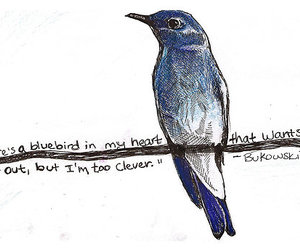 bird, Bukowski, and blue image