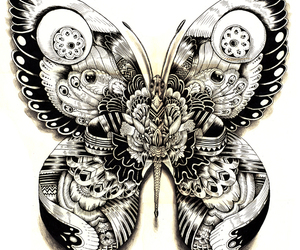 butterfly, art, and illustration image