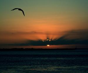 sunset, bird, and beautiful image