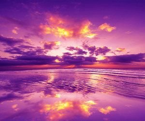 pink, purple, and reflection image