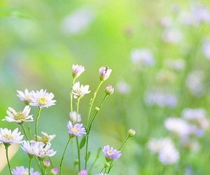 Dream, life, and flowers image