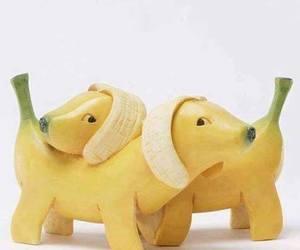 banana, dog, and food image