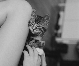 <3, black and white, and gato image
