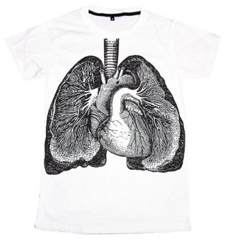 anatomy, heart, and lungs image