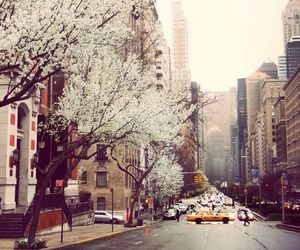 beautiful, blossom, and city image