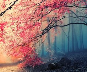 pink, autumn, and favourite image