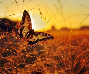 autumn, beautiful, and butterfly image