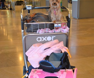 adorable, airport, and animal image