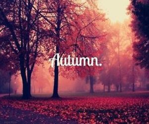 autumn, love, and girls image